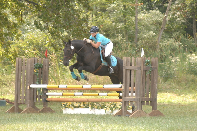 Athletic Sweet Gelding with Experience in Dressage and Eventing