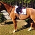Fun and Flashy AQHA Large Pony Gelding!
