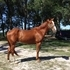 GORGEOUS REGISTERED GELDING