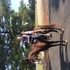 Beautiful Smooth Trail Gelding