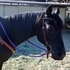 Perfect Christmas Present! Beautiful Registered Mare