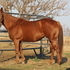 FIRST DOWN DUET, FF eligible AQHA race mare started on barrels