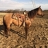 Miss Tuff Honey ranch/reining/working cow horse mare