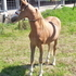 ASPC GOLDMINES BOUNTY HUNTER COLT