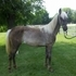 ** GORGEOUS!!  Yearling Filly....Definitely A Sweetheart!! **