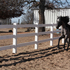 Dressage Prospect - Andalusian/Friesian Cross