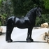 Approved F.P.Z.V./A.W.S. Breeding Stallion