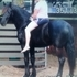 Beautiful Friesian with great bloodlines and an A+ personality