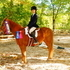 Large Pony 14.2 Shiloh's Sensation perfect for moving up