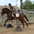 3 day eventer prospect