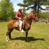 Well mannered, National Caliber Peruvian Gelding, Lots of presence  Pro trained.