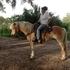 Reg Ride and Drive HAFLINGER mare