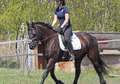 ***XAVIA WHF**2007 Friesian/Warmblood***Outstanding Dressage Prospect***