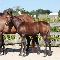 Lovely filly by Romtantic Star at a great price