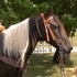 Beautiful Black/White Tobiano Saddle Mare