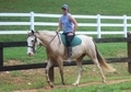 Naturally gaited Buckskin Sabino Filly