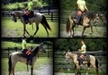 2013 Pusher Buckskin Filly, Started Under Saddle, Already a Head Turner