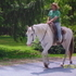 BEAUTIFUL APPALOOSA GELDING