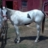 Very sweet and loving gelding