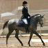 Nationals Qualified Dressage/Sporthorse  Gelding