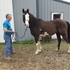 Horse heaven farms call George 618-599-7306