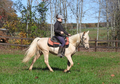 Super Gaited Heritage Cross TWH Gelding