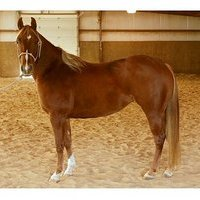 Docs Okie Quixote granddaughter- Cowhorse deluxe