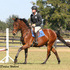 A circuit Quality Holsteiner jumper/dressage 3 yr old gelding