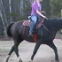 Big black sweet gaited gelding/Percheron/Walker cross