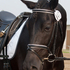 2009, 16.1hh Black Morgan Dressage Gelding