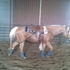 2000 Stout & Flashy Riding Gelding