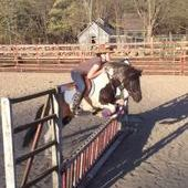 S*O*L*D* AWESOME JUMPING PINTO PONY! ! QUIET! ! !