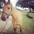 Wonderful Quarter Horse Mare