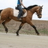 Buckskin Friesian DRESSAGE RIDERS LOOK!!!  MOVEMENT!