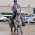 I will ride horses at shows or train them for you your choice