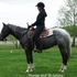 Geldings Black & White Riding Horses Appaloosas 4 sale appaloosacentre.com