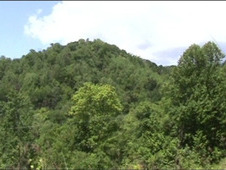 55. 61 Acres Near Blowing Rock, Nc!