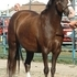 Pretty Reg. Section B Welsh Mare.Can be lease for $100.00 month on property