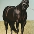 Star Seclusion World and Congress Champion Sire and Grand Sire.  Stallion Service Only