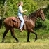 Bombproof Rocky Mountain Gelding~Confidence Builder