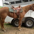 DUAL PEP BARREL/COW AQHA MARE, QUIET AND EASY TO RIDE
