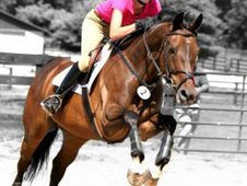 Elite Proven Show Mare Avaliable for (possible) free lease