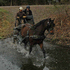 ATTN: Competitive Trail Riders #1 Trail Mount & Traffic Safe, Basic Dressage, Carriage Drives XC