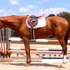 17hh Handsome Hunter Prospect!