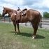 You will search a lifetime to find a horse like this one! To no fault of his own he is up sale! DONT MISS OUT!