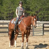 ~~Halter/Western Pleasure Horse With Points!~~