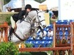 12 yr old Fancy Dutch Warmblood Gelding *Video*