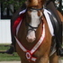 PRICED REDUCED!! Gorgerous 1st level Champion 16.1 hand Overo Paint Gelding