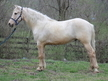 Beautiful seasond trail gelding