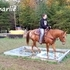 Very calm, anyone can ride trail GELDING